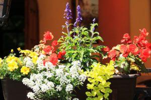 Dekoracje kwiatowe klasztornego podwórza 2020